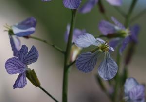veiny-flower12